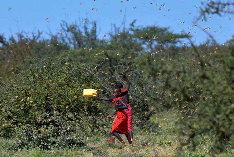 East Africa braces for another locust invasion