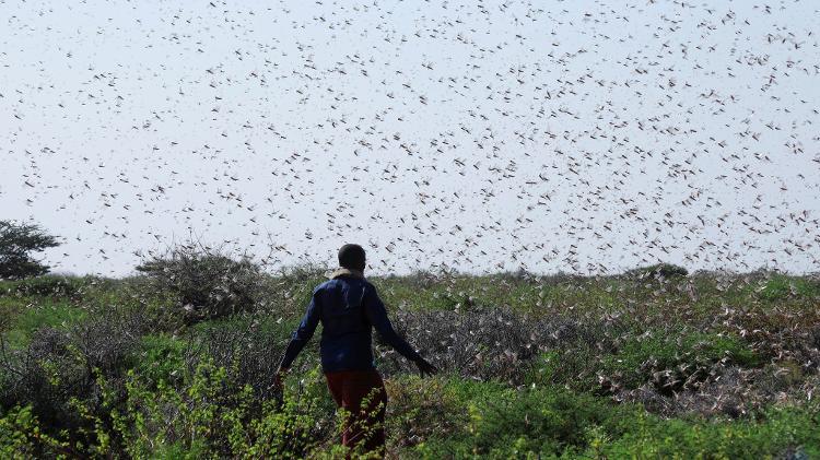 Locust invasion made worse by unusual heavy rainfall, floods - Citizentv.co.ke