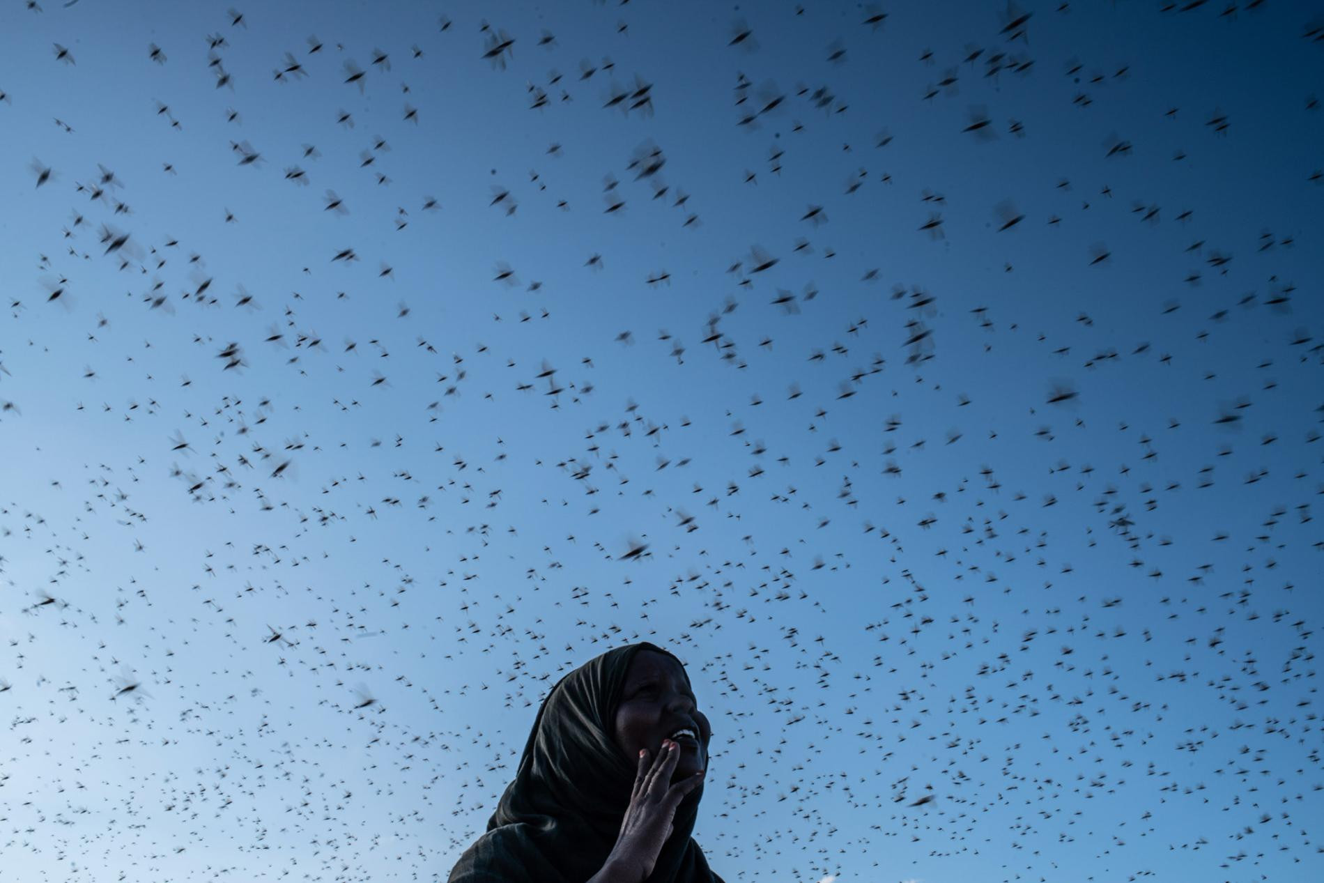 At the Burao IDP camp, a woman watches as a swarm of locusts darkens the sky. Erratic limate conditions that cause severe droughts across the Horn of Africa in some years yield extreme rainfall in others—the trigger, in 2019, for the worst outbreak of desert locusts Somalia has seen in decades. The locusts can devour a field of crops in hours.